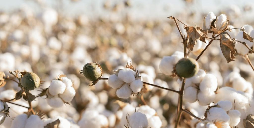 Agricultural Produce - Cotton