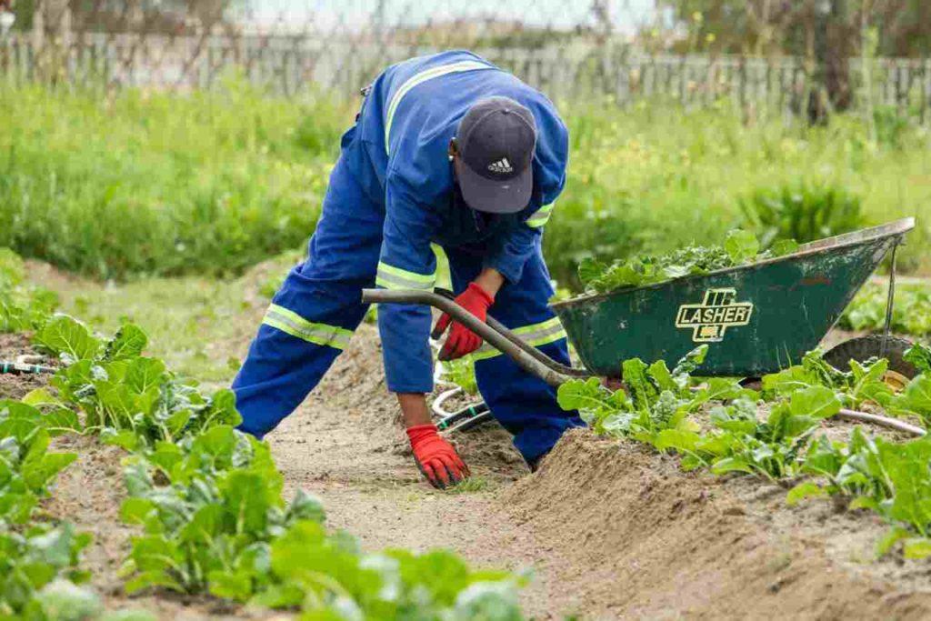 Soil-Scientist-checking-the-soil