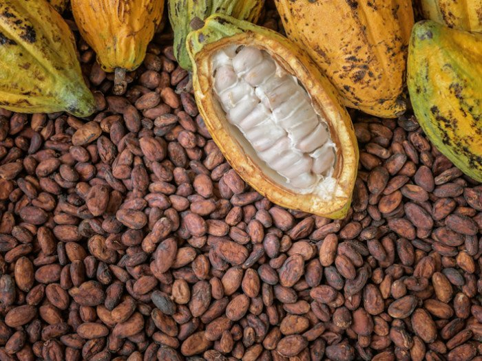 Agricultural Produce - Cocoa
