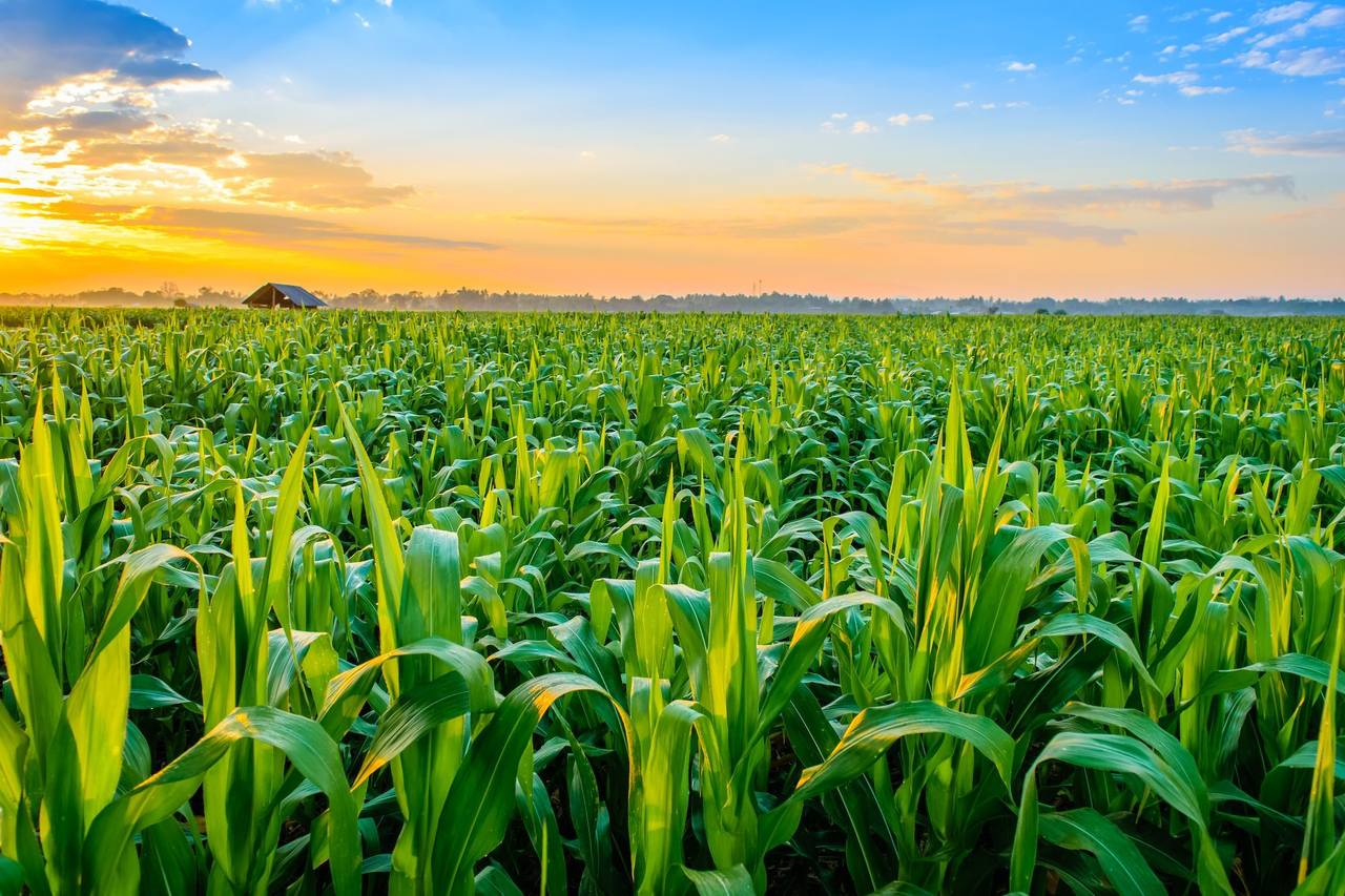 JSS2: AGRICULTURAL SCIENCE – 1ST TERM