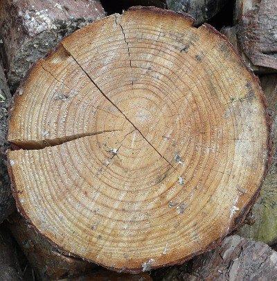Timber Shake