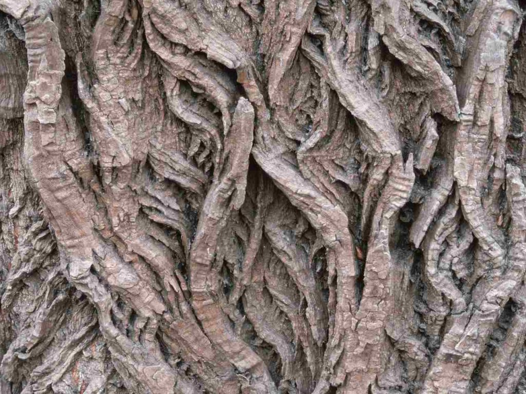 Willow Bark used in treating acute low back pain.