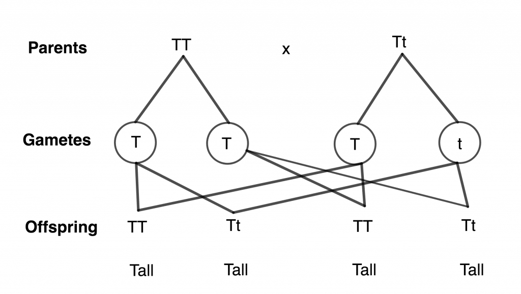 Basic Science Jss3 - Traits