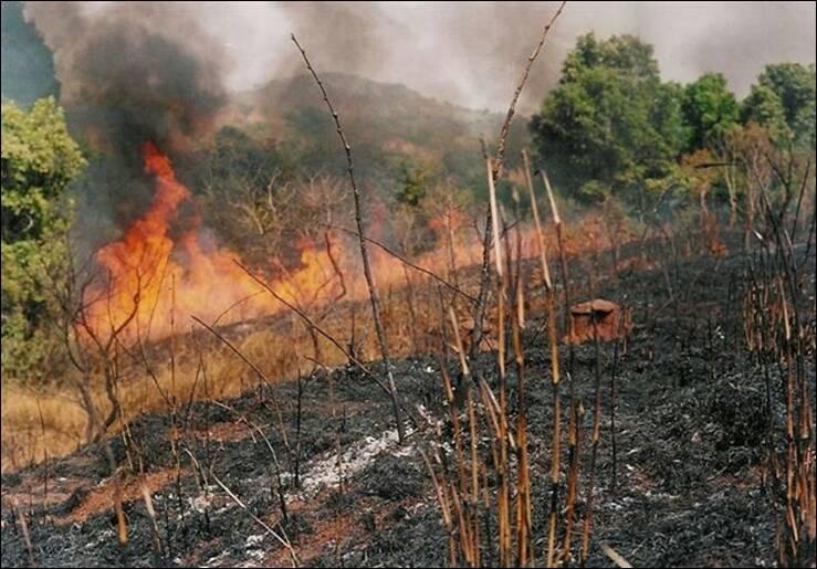 Bush-burning